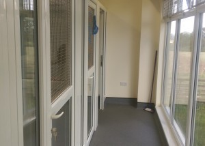 Colliers Cattery in Sussex